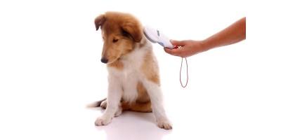 Чипирование животных. Что это такое?
